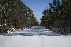 Camino y árboles Nevado Imagenes de archivo