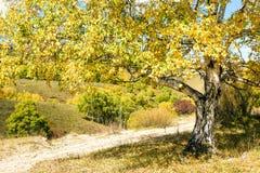 camino y abedul blanco en el otoño Imagenes de archivo