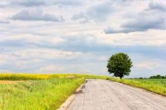 Camino y árbol Fotos de archivo libres de regalías