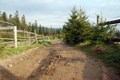 Camino y seto Foto de archivo
