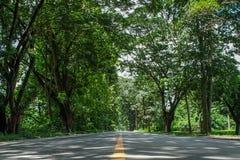 Camino y túnel del árbol Imágenes de archivo libres de regalías