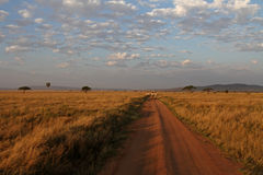 Camino y transporte de Serengeti Imagen de archivo libre de regalías