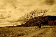 Caminos Imágenes de archivo libres de regalías