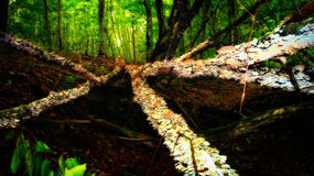 Caminos de la seta Imagen de archivo