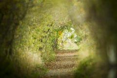 Caminos de las naturalezas fotografía de archivo