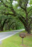 Caminos de Lowcountry Imagen de archivo libre de regalías