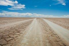 Caminos del árbol en desierto Foto de archivo