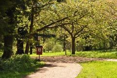 Caminos del arbolado Fotografía de archivo libre de regalías