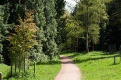 Caminos del arbolado Imagen de archivo libre de regalías