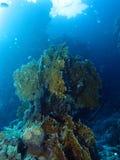 Caminos del filón en el filón peligroso, los filones de St John, Mar Rojo imagen de archivo