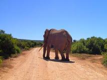 Caminos del mundo: Elefante grande del colmillo Foto de archivo