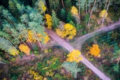 Caminos forestales cruzados Imagenes de archivo