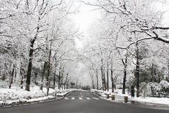 Caminos forestales nevados fotos de archivo libres de regalías