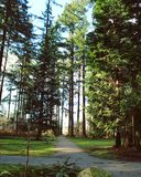 Caminos a través del bosque enorme de la primavera Foto de archivo libre de regalías