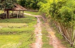 Caminos y charcos Foto de archivo libre de regalías