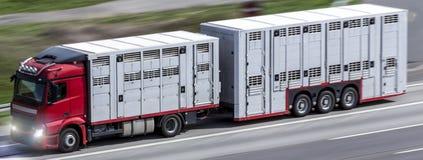 Camion animale del trasportatore che accelera su una strada principale Immagine Stock Libera da Diritti