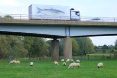Camion che passa ponte sopra il terreno coltivabile Immagine Stock