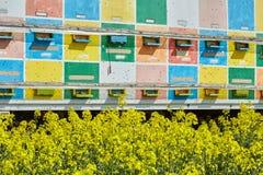 Camion con gli alveari in un campo della violenza Fotografie Stock Libere da Diritti