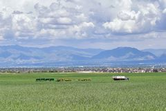 Camion d'annata dell'azienda agricola e macchinario del raccolto con il punto di vista panoramico di Wasatch Front Rocky Mountain Fotografia Stock
