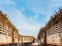 Camion de canne à sucre complètement chargé à l'usine de moulin de sucre photos stock