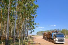 Camion de notation avec le rondin d'eucalyptus pour l'industrie de papier ou de bois de construction, Uruguay, Amérique du Sud photos libres de droits