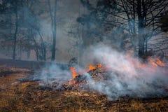 Camion de pompiers pour éteindre un incendie de forêt sapeurs-pompiers à s'éteindre photographie stock libre de droits