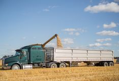 Camion dei semi parcheggiato e che è caricato con il grano fotografia stock libera da diritti