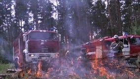 Camion dei vigili del fuoco da fuoco Bruci gli aghi dell'albero pericolosi alla scena della foresta Resto attivo pericoloso sulla stock footage