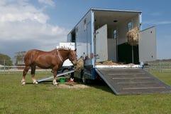 Camion del cavallo e cavallo Fotografie Stock Libere da Diritti