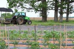 Camion dell'azienda agricola nel campo Fotografie Stock