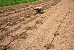 Camion in giardino agricolo con irrigazione goccia a goccia Fotografia Stock Libera da Diritti