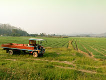 Camion per l'azienda agricola in Tailandia Immagini Stock
