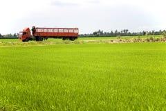 Camion rosso attraverso il campo di risaia Fotografia Stock Libera da Diritti