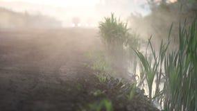 Camions traversant la forêt brumeuse banque de vidéos