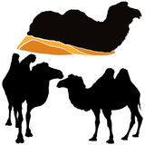 cammelli Fotografie Stock Libere da Diritti