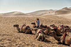 Cammelli che riposano alle dune di sabbia di Mingsha Fotografia Stock