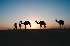 Cammelli della siluetta in deserto del Thar Immagini Stock