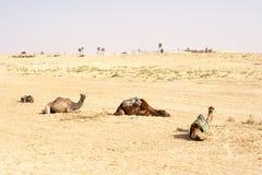 Cammelli, deserti del Sahara, Tunisia fotografia stock libera da diritti