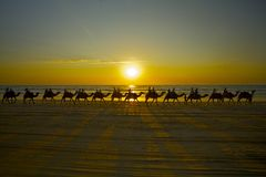 Cammelli di Broome Fotografia Stock