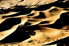 Cammelli e deserto Immagine Stock Libera da Diritti
