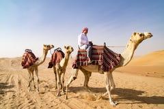 Cammelli guidanti in deserto Fotografie Stock Libere da Diritti