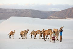 Cammelli nel deserto bianco della sabbia Immagine Stock Libera da Diritti
