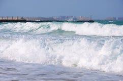 Cammelli su una spiaggia della Doubai Fotografie Stock Libere da Diritti