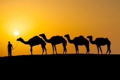 Cammelli in un deserto Fotografia Stock Libera da Diritti