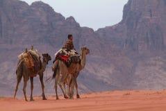Cammelli in Wadi Rum, Giordania fotografia stock libera da diritti