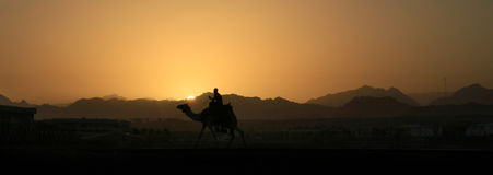 Cammello al tramonto in montagne del Sinai Immagine Stock