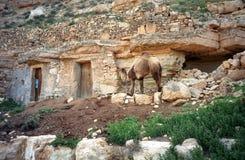 Cammello, Chenini, Tunisia Fotografia Stock