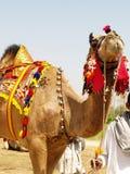 Cammello decorato Fotografia Stock