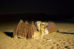 Cammello del Dubai Fotografie Stock