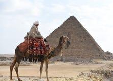 Cammello dell'Egitto fotografie stock libere da diritti